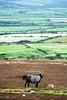 Horse perspective (Danology) Tags: horse southwales wales landscape unitedkingdom gower 2012 llangennith 52weeks week37 52weekchallenge 52weeksofphotography 522012 52weeksthe2012edition