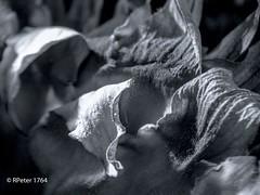 and the sun shake my hand (R-Pe) Tags: life blue red white black rot eye art robert water coffee café smile face breakfast night train canon square photo essen gesicht wasser noir day foto mask nacht live tag fine wiese kaffee zug security ferrari bleu peter hut trainstation rosen blau augen lachen trinken bahn wald schwarz chai figur acryl leben maske pastell masken ingwer larve blaw bahnstation 1764 tschai rpe röbi 1764org www1764org