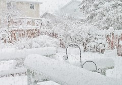 My Back Garden, During A Huge Snowstorm! (bigbrowneyez) Tags: winter snow cold wet snowflakes snowstorm fresh neve inverno freddo mybackgarden ottawaontariocanada miogiardino flickrsnow photographyforrecreation vigilantphotographersunite