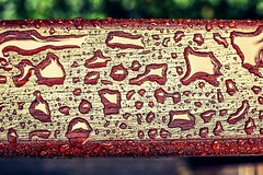 Water drops (Martin Snicer Photography) Tags: wood art water photoshop waterdrops lightroom 6d niftyfifty phtographer photoshopexpress