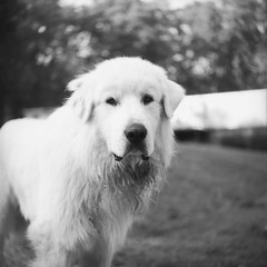 I put my hand down and he sprinted toward me and started ecstatically jumping around! This was his face when I had to leave    Shot on Kodak T-Max Film with a 1959 Yashica-A.     #filmphotography #yashica #mediumformat #120mm  #filmphoto #filmcommun (// Ladwar Photography //) Tags: instagramapp square squareformat iphoneography uploaded:by=instagram yashica film medium format 120mm 120mmfilm filmphotography kodak monochrome tmax ilford ilfosol outdoor sky streets portrait beautiful camera miami alley self photographer street blackandwhite