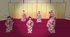 Yukata Kai 2016 begins 11 am slt 13th of August! (kikutsuruhanafusa) Tags: maiko geisha yukata odori shamisen otsozumi kotsozumi shikomi kikuyu kikutsuru kikumaru kikune yumi ayumi kaburenjo miyagawacho hanamachi hanafusa okiya