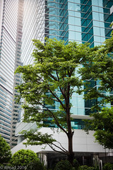 Trees and Towers in harmony... (EHA73) Tags: aposummicronm1250asph leica leicamp typ240 hongkong travel trees towers buildings greenery city outdoor