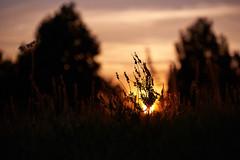 Avant la nuit (Hexilene) Tags: soleil nuit proxy plante passion paysage color couleur