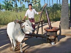 On_ the_way_ to_ Mt.Popa_Bagan (2) (Sasha India) Tags: bagan myanmar burma travel journey asia মায়ানমার ভ্রমণ 緬甸 旅行 म्यांमार यात्रा ミャンマー бирма мьянма баган паган путешествие путешествия подорожі подорож мандри மியான்மார் பயண พม่า การท่องเที่ยว מיאנמר לִנְסוֹעַ ميانمار سفر μιανμάρ ταξίδι