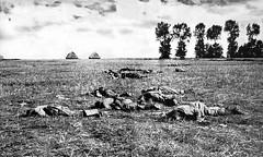 "1914 Marne - Soldados derrotados de Alemania (Alfredo Grados Rivero) Tags: princip ""primera guerra mundial"" wwi ""world war i"" sarajevo kaiser wilhelm zarnicolas serbia ""gran bretaña"" austria berlin belgrado belgica bruselas paris verdun ypres marne somme gallipoli rusia schlieffen ""san petersburgo"" lenin ""erster weltkrieg"" deutschland preusen germany alemania grossbritannien ""united states"" ""soviet union"" antwerp prussia unionsovietica artois cerna mons galicia polonia arras amiens matahari champagne treguanavidad krasnik komarov jadar przmysl lodz lemberg tannenberg lions lyons mulhoude lorena ardenas charleroi alsacia souchon navidad racionamiento liege lieja"