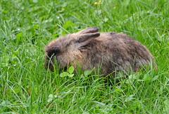 DSC_3429 (mavnjess) Tags: 15 june 2016 vicenza italy italia coniglio coniglios rabbit rabbits bunny bunnies