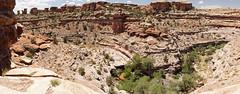 Big Spring Canyon Overlook (Tjflex2) Tags: bigspringcanyonoverlook canyonlandsnationalpark utah