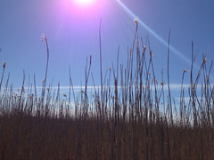 2014-04-25 Kevtretki Vanhankaupunginlahdelle ja Lammas-saareen (hetyfi) Tags: kevtretki helsingintyttmtry hety viikki lammassaari vanhankaupunginlahti eriksneider teemubm