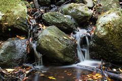 La Sangre del Cedro (yeray.ventura) Tags: bosque cedro paisaje naturaleza agua rio riachuelo corriente largaexposicin verde