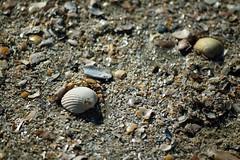 DSC_0168_01 (damarconet) Tags: sand strand römö north sea beach macro nikon nordsee danmark dänemark lakolk