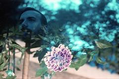 film (La fille renne) Tags: film analog 35mm lafillerenne mx doubleexposure multipleexposure ebs exposingbothsidesofthefilm bluescale minoltax700 50mmf2 lomography lomochrome lomochrometurquoise lomochrometurquoisexr100400 splitzer blue turquoise flowers people portrait