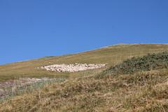 Croisse Baulet. 2236m (Stefho74) Tags: stefho74 sallanches croissebaulet rhonealpes hautesavoie cordon combloux randonneenmontagne promenade