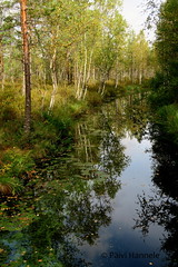joki_heijastus (Paivi Hannele) Tags: finland ourfinland landscape luonto kasvi maisema vesi puut thisisfinland joki jrvi syksy autumn