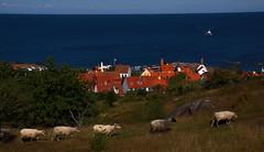 2016-08-15 (Gim) Tags: gudhjem bokul stersen stersjn baltic baltique ostsee bornholm danmark danemark denmark dnemark gim guillaumebavire
