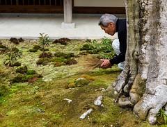 Jojakko-ji V (Douguerreotype) Tags: shrine temple buddhist kyoto japan garden candid face moss tree