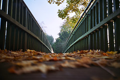 Autumn Bridge (The Nick Page) Tags: bridge autumn brown leaves yellow 35mm gold lomo lomography branches low lomolca analogue lowdown hertfordshire hertford lowangle fujisuperia400