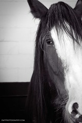 Lungo (Zo0Bear) Tags: old our wild horse brown white black colour eye texture beautiful face its look animal sepia loft composition hair paper poster prime ancient long symbol antique farm background wildlife profile ears daily structure dirty historic used relief worn half older letter second nostalgic historical writer aged papyrus write rough exquisite past oldies platinum challenge scroll stallion equine outdated mangy odc attrited symbolical
