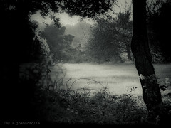 The Dark Forest Revisited (I) (joansorolla (more off than on)) Tags: bw tree monochrome field arbol catalonia catalunya prado arbre prat p7000 larocadelvalls thedarkforestrevisited