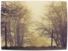 Fort Langley, British Columbia (careth@2012) Tags: fog scenery britishcolumbia chariotsofnaturelevel1 chariotsofnaturelevel2