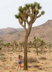 _MG_5374 (Mary Susan Smith) Tags: california travel vacation tree tourism landscape holidays desert perspective joshuatree posing short teenager tall joshuatreenationalpark inthedistance challengeyouwinner cychallengewinner thechallengefactory tcfwinner tcfunanimouswinner storybookwinner