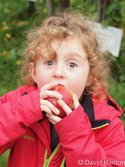 Small girl bites into a freshly picked apple (dave hanlon) Tags: autumn apple fruit familie herfst harvest natuur orchard appel kind apples applepicking beet boomgaard meisje eten buiten appletree fruitpicking gezond genieten hap oogst zoet eet spanning appelen rijp plukken actief pluk beleving vrucht appelboom hapje spannen kleuter lisserbroek olmenhorst natuurbeleving rijpappel rijpfruit