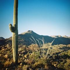 (K e v i n) Tags: arizona southwest film nature analog cacti 35mm outside outdoors lomo lomography desert az saguaro firstroll sonorandesert lomograph 1stroll southernarizona kodakgc400 southernaz dianamini