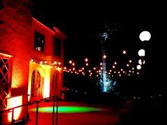 Amber/Champagne Lighting - Festoon Lighting - Blue Lighting - Tree Lighting - Laguna Gloria