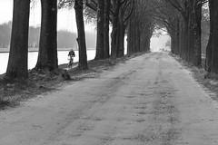 It's been quite a long road (Gies!) Tags: bike bicycle canal eiken bomen lane kanaal oaktrees fiets fietser