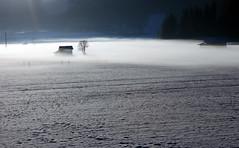Morgennebel (mikiitaly) Tags: schnee winter italy sdtirol altoadige wipptal photomix paololivornosfriends saariysqualitypictures bestcapturesaoi sailsevenseas elitegalleryaoi mygearandme elementsorganizer11 besteverdigitalphotography besteverexcellencegallery vigilantphotographersunite vpu2