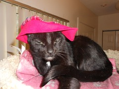 The Return of the Hat Model (Mr. Ducke) Tags: hat cat kitty parsnip