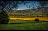 Cades Cove Meadow (jeannie'spix) Tags: flickr meadow cadescove cadescove2