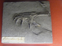 Dimorphodon (subhumanfreaks) Tags: uk europe jurassic extinct pterosaur