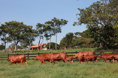 "FAZENDA DA GRAMA (27) • <a style=""font-size:0.8em;"" href=""http://www.flickr.com/photos/92263103@N05/8569015215/"" target=""_blank"">View on Flickr</a>"