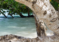 A Tree with a sense of humor (April.Moulton) Tags: ocean travel tree face bark micronesia oceania pohnpei travelphotography federatedstatesofmicronesia aprilmoulton