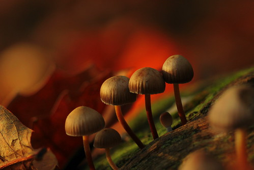 the mushrooms family...