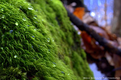 Moss and Water (B.G.Schultz-Photography) Tags: moss nikon hinkleyreservation d7000