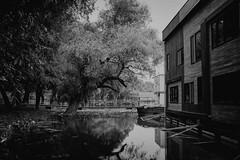 Monochrome calmness (fiffo1892) Tags: serbia belgrade hostel danube monochrome fujix100s fuji x100s blackandwhite travel river