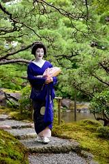 (nobuflickr) Tags: 20160718dsc04441      maiko  geiko   kyoto japan miyagawachou