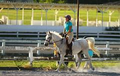 IMG_2560 (SJH Foto) Tags: horse show hunter jumper class girls teenage teen riders action shot tweens