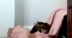 Potato cat is a spastic cat via http://ift.tt/29KELz0 (dozhub) Tags: cat kitty kitten cute funny aww adorable cats