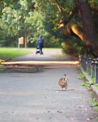 I'm walkin' (A_Peach) Tags: 52wochenfotochallenge helios duck panasoniclumixgx8 helios442 amwegrand walkers walking