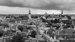 The Overlook (McQuaide Photography) Tags: tallinn estonia europe northerneurope sony a7rii ilce7rm2 alpha mirrorless 1635mm sonyzeiss zeiss variotessar fullframe mcquaidephotography adobe photoshop lightroom tripod manfrotto light outdoor outside building city capitalcity oldtown architecture timeless medieval historic history unesco worldheritagesite blackandwhite bw blackwhite mono monochrome elevated aerial above tower view cityscape 169 widescreen panoramic