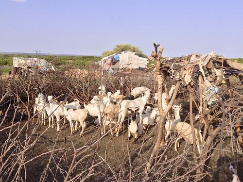Somaliland Village