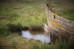 On the Water Memories (bambiscat) Tags: boat wood rowingboat lichen puddle marsh broken washedup fishing boat fallingapart