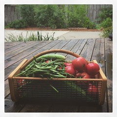 Things That Grow When You're Away (matthewkaz) Tags: instagramapp square squareformat iphoneography uploaded:by=instagram slumber tomatoes tomato cucumber cucumbers greenbean greenbeans garden homegrown gardens gardening basket home house burcham eastlansing crops michigan 2016