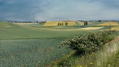 Spain in June on the Camino. (France-♥) Tags: june spain espagne paysage landscape texture champs fields europe camino
