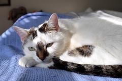 DSCF7598_p_g (thebiblioholic) Tags: pico cat 366 tumblr
