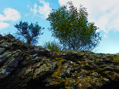 Skylined (elphweb) Tags: falsehdr fhdr seaside trees forest bush foliage australia rocky rocks outdoor