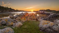 Stone fence, Frya (kkorsan) Tags: norge kveld midtnorge solnedgang steingjerde norway sunset seascape stonefence trndelag evening eveningcolours eveninglight frya dyry srtrndelag srdyry